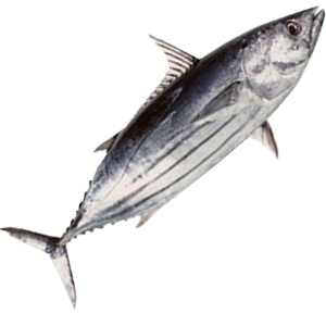 erinda seafood supplier supplier ikan products erinda seafood supplier supplier ikan